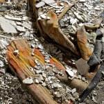Destroyed Carpet — Stock Photo