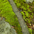 Green Moss — Stock Photo #2121727