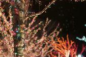 Holiday Lights — Stock Photo