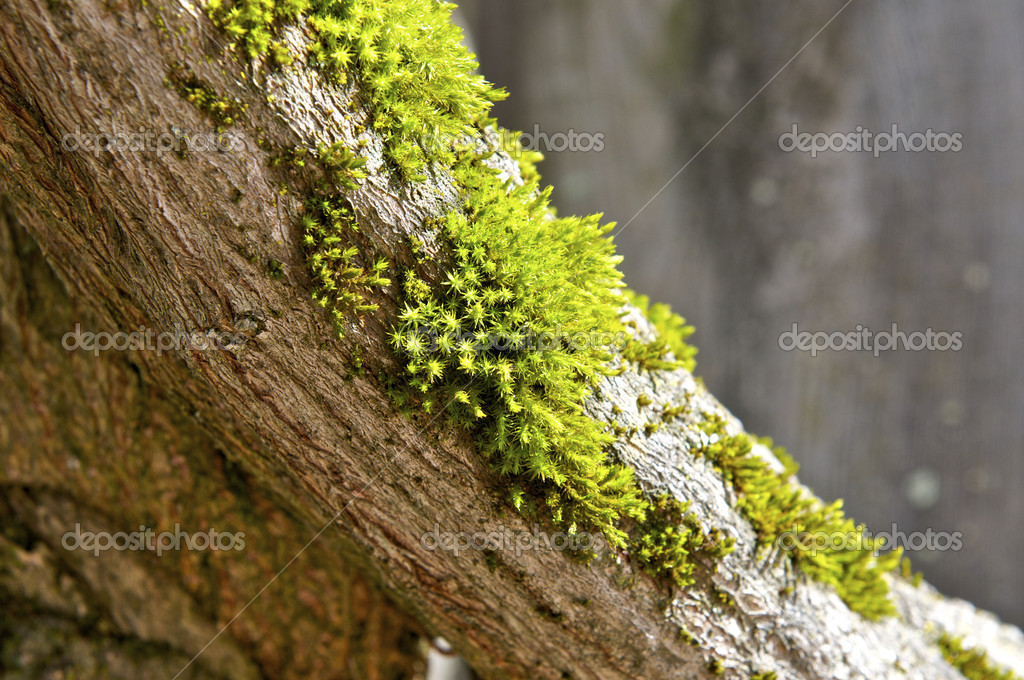 Bright Green Moss on Tree — Stock Photo #2121710