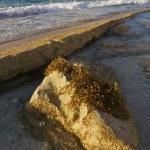 Seaweed on Rock — Stock Photo