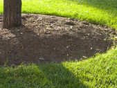 Mulch around a Tree — Stock Photo