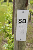 Vineyard Sign — Stock Photo