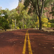 Zion National Park Road — Stock Photo