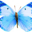 Color butterfly isolated — Stock Photo