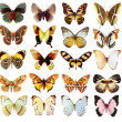 Some various butterflies isolated - Stok fotoğraf