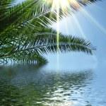 Palms sun and sea illustration — Stock Photo