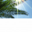 Palms  and sun — Stock Photo