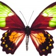 butterfly isolated — Stock Photo #2094941