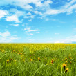 Stock Photo: Landscape with green grass meadow, field