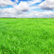 Landscape with green grass meadow, field — Stock Photo