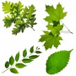 Isolated collection of leafs — Stock Photo