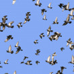 Flying flock birds — Stock Photo #2099992