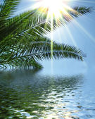 Palms sun and sea illustration — Stockfoto