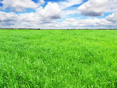 Landscape with green grass meadow, field — Stockfoto