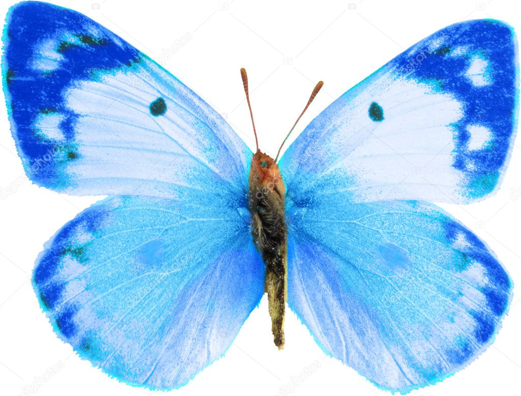 Color butterfly isolated — Stock Photo #2092868