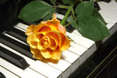Rose over piano keys — Stok fotoğraf