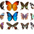 Some various butterflies isolated on  wh — Stock Photo