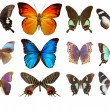 Stock Photo: Some various butterflies isolated on wh