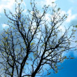 Stock Photo: Siluette of tree