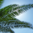 Stock Photo: Palms silhouette