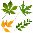 Collection of leafs isolated — Stock Photo