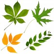 Collection  of leafs isolated - Stock Photo