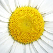 Stock Photo: isolated flower&quot