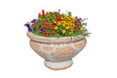 Pot with flowers — Stock Photo