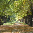 Footpath  park  in  autumn - Stock Photo