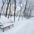 Park landscape in winter — Stock Photo