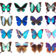 Some various butterflies isolated — Stock Photo #2134396