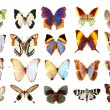 Some various butterflies isolated - Stock Photo