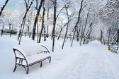 Park landscape in winter — Stockfoto