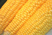 Yellow corn isolated close-up — Stockfoto