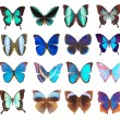 Some various butterflies isolated — Stock Photo #2149957