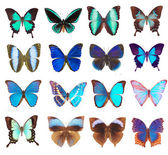 Some various butterflies isolated — Fotografia Stock