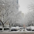 White snow covered the trees in city — Stock Photo #2093876