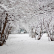 Stock Photo: White snow covered shrubbery