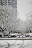 White snow covered the trees in city — Stock Photo