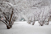 White snow covered the shrubbery — Stock Photo