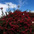 Red flowers under blue sky — Stock Photo