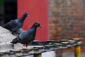 Pigeons and candleholders of hinduism — Stock Photo
