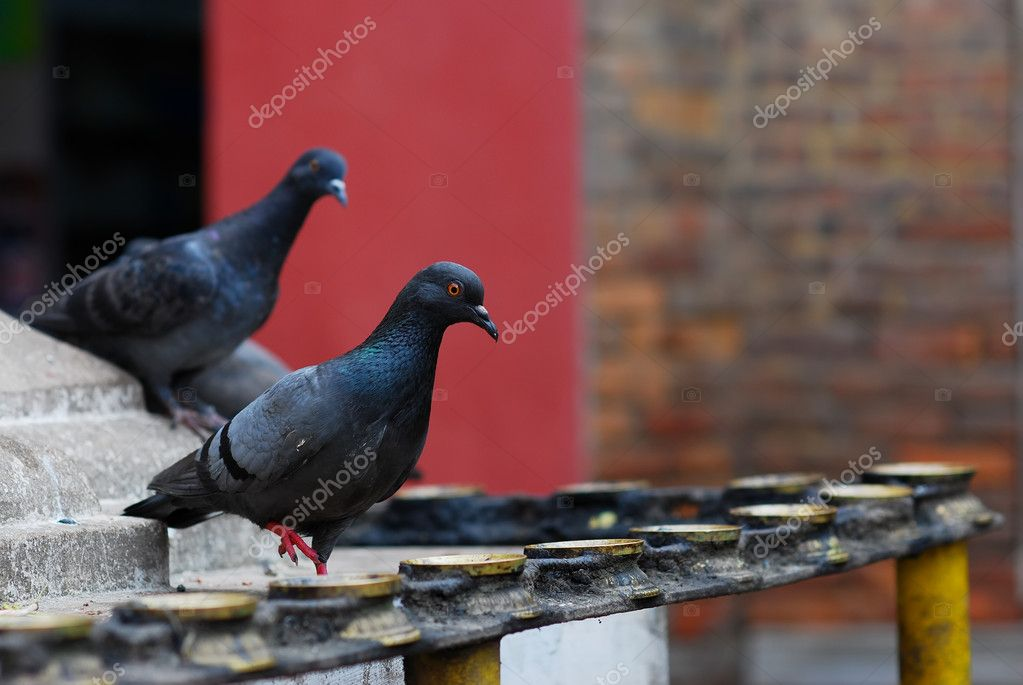 Pigeons and candleholders of hinduism at nepal — Stock Photo #2104257