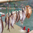 Dried fish - Photo