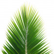 Green palm leaf — Stock Photo #2178976