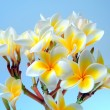 Tropical flower - Stockfoto