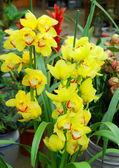 Tropiska blommor — Stockfoto
