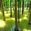 Forest and water — Stock Photo