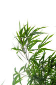 Bamboo leaves — Stock Photo